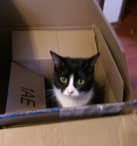 Poops in the box