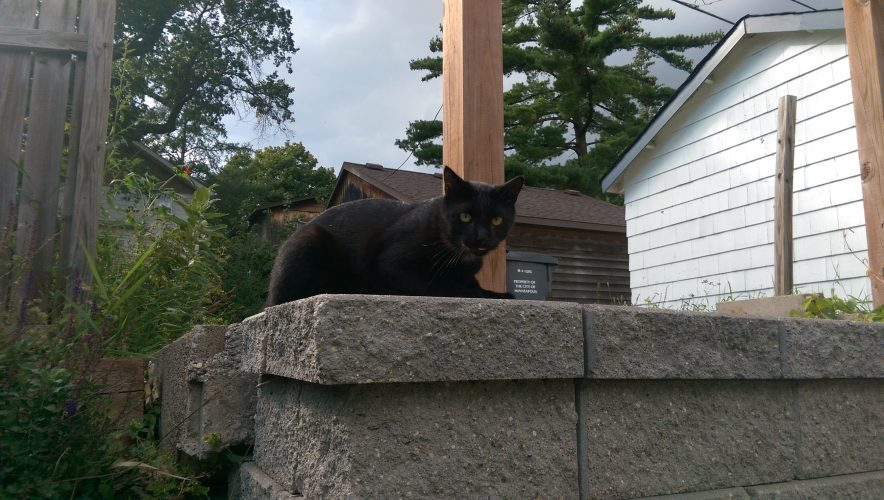 Guest Cat; Team Jacob hanging on our retaining wall. 2/3.
