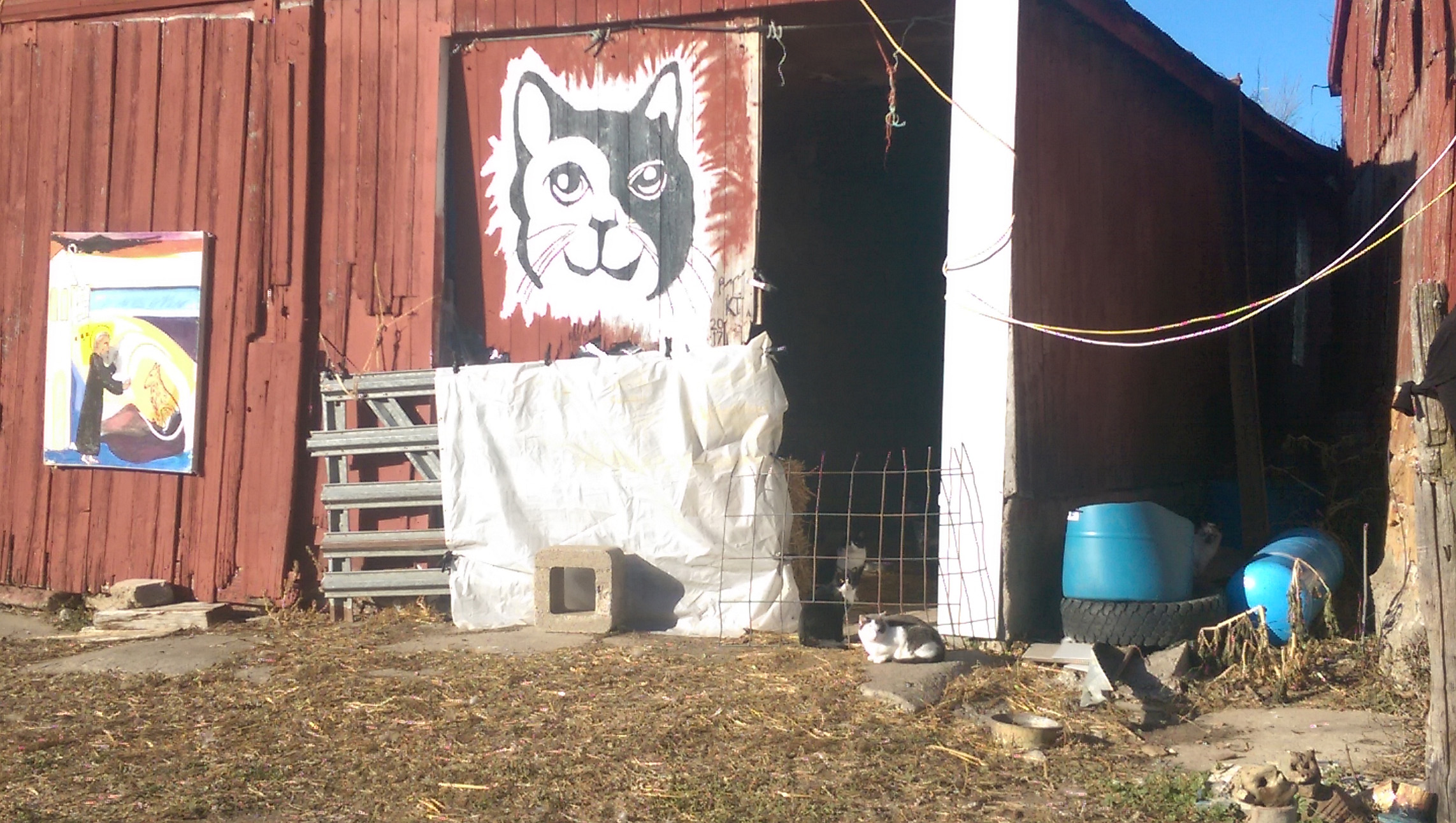 Guest Cats: Cat Barn!