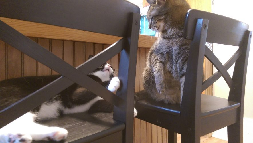 2 CHAIRS, 2 CATS, 1 CAT FIGHT.